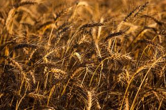 A área total a ser colhida teve alta de 3,9% em relação ao ano passado e chegou a 68 milhões de hectares. Imagem: (R