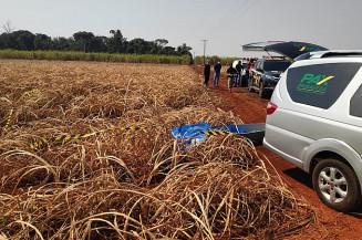 Corpo de mulher encontrado na zona rural de Dourados (Imagem: Adilson Domingos)
