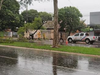 Em Dourados Defesa Civil trabalha na retirada de árvores das vias (Imagem: Dourados Informa)